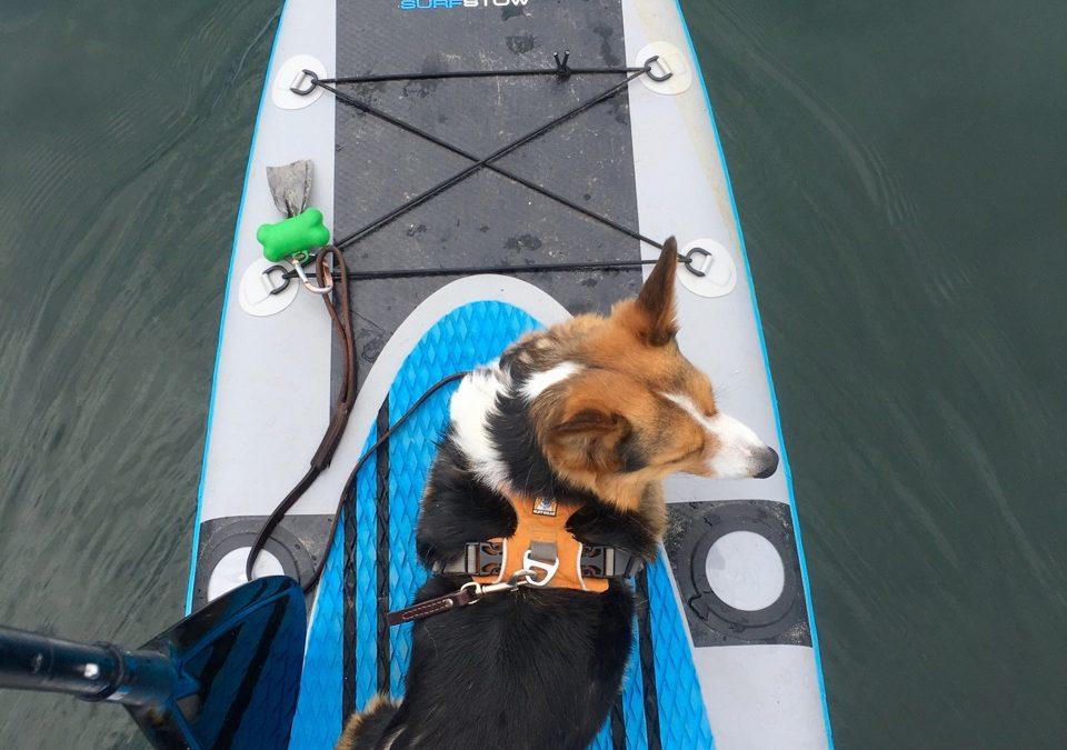 Thurston's Adventure Destination #10 – Puget Sound
