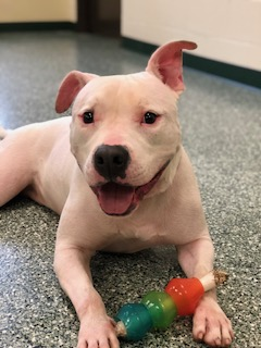 7/29 – Featured Pets of the Week – Kain and Lola