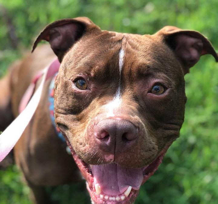 8/19 – Featured Pets of the Week – Octavia and Arnold