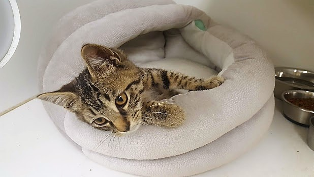 Cold and Alone – a Little Kitten's Miracle Rescue – #GivingTuesday