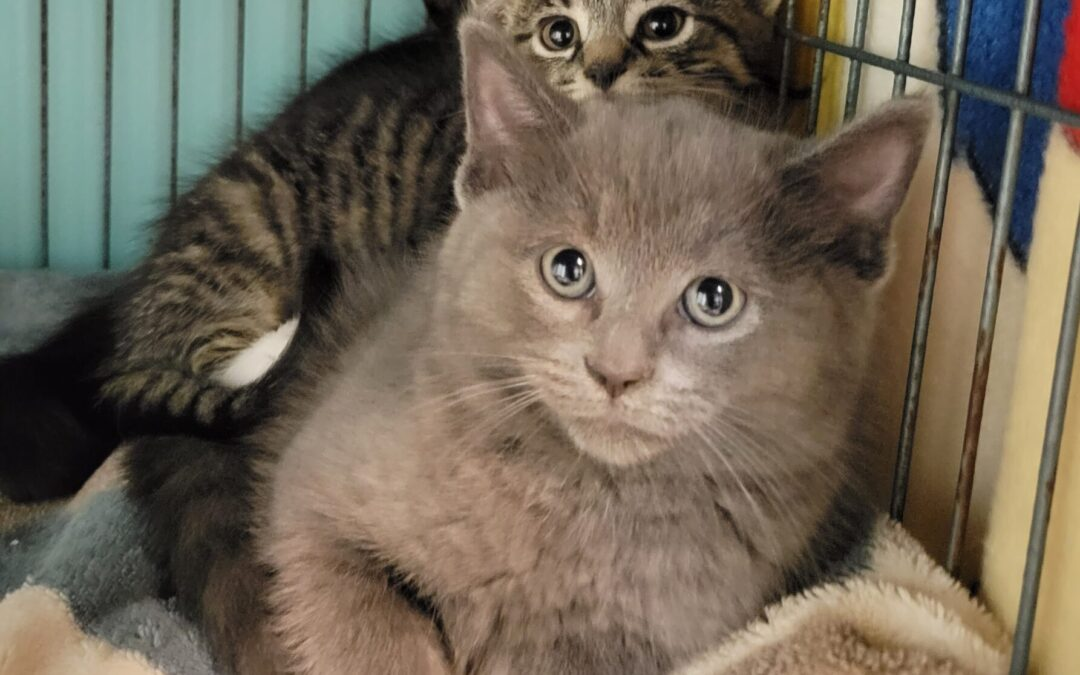 Lives Saved – Kittens given a second chance