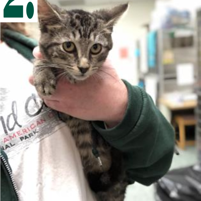 Tiny Kittens Given Life-Saving Boost